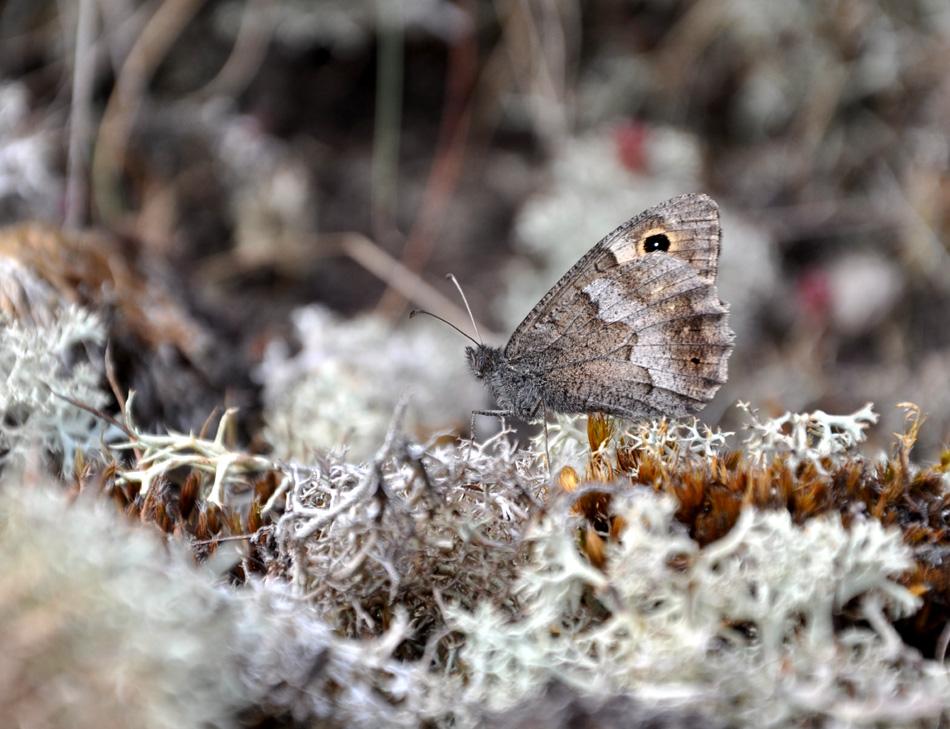 papillon-faune